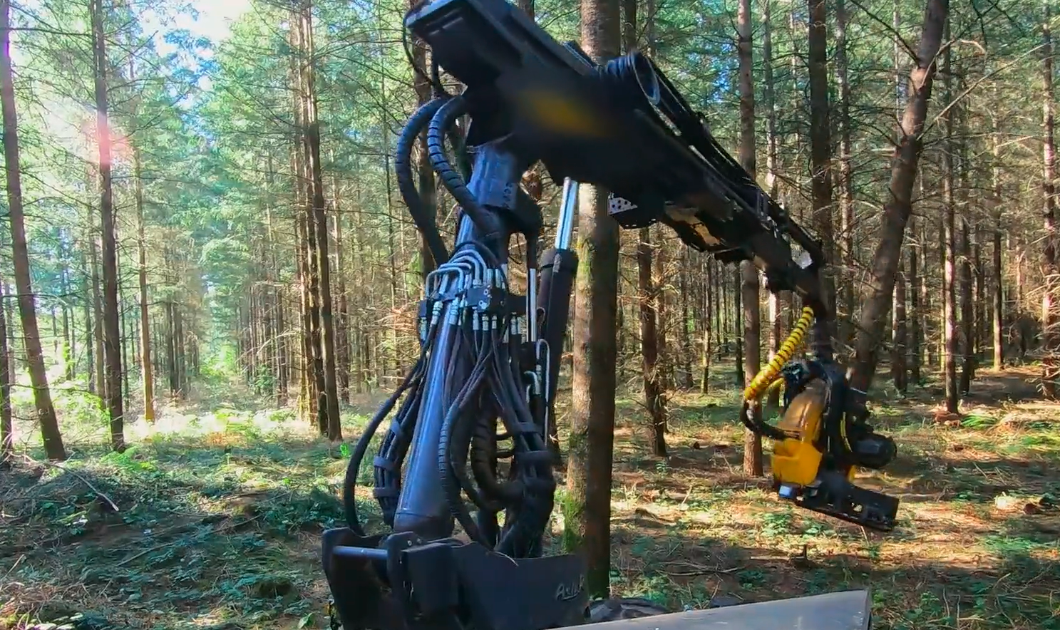 La machine coupe un arbre par minute contre 10 mn pour un bucheron.