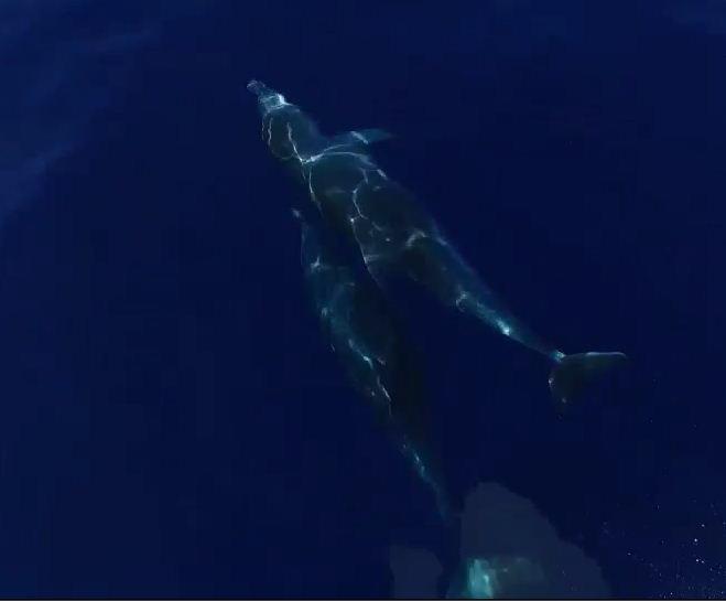 Observation des mammifères marins